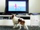 Pes pred televízorom